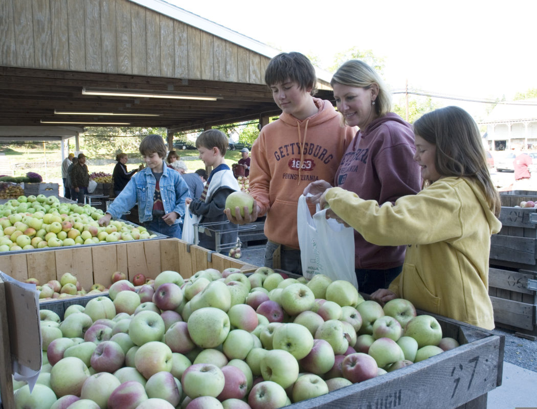 kids picking from a bin of apples